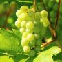 Image de la categorie Vins de France de Domaine de Rochemond